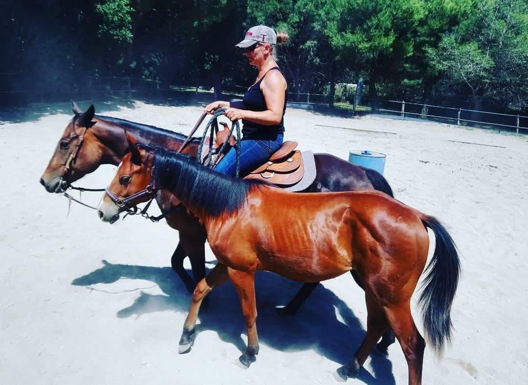 Coaching débourrage et travail du cheval